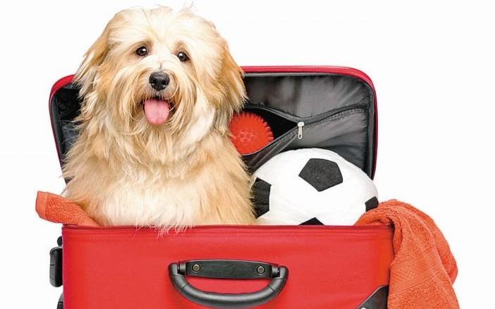 Viajar en ruta con mascotas