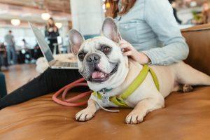 WeWork oficinas pet friendly