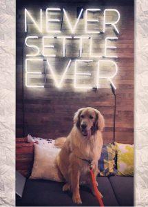 Oficinas que aceptan mascotas.
