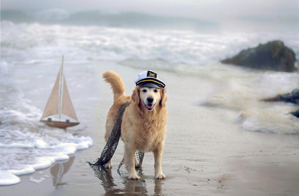 Sugerencias para la protección solar de sus perros. Vacaciones en la playa.